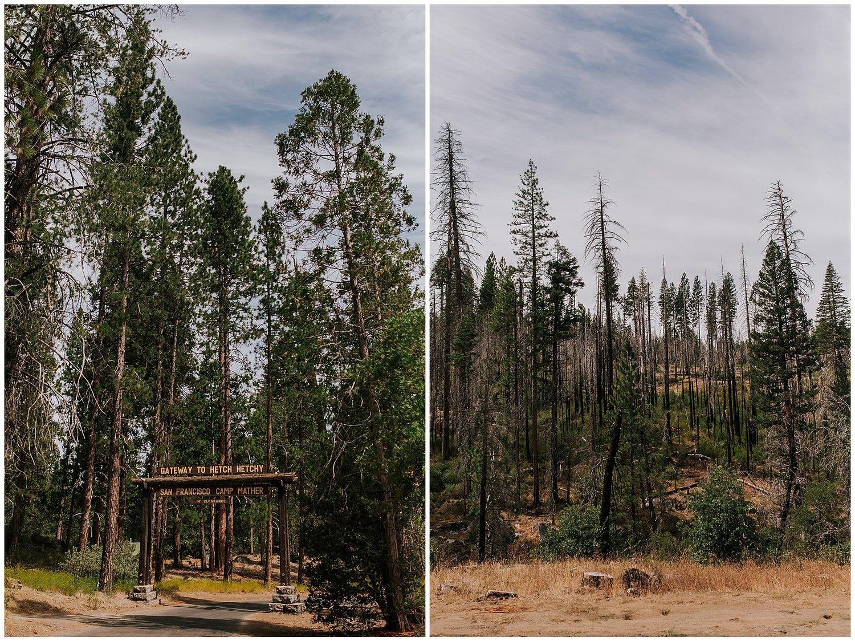 view of Yosemite Park